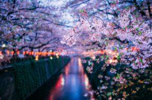 Un corso d'acqua cittadino con gli alberi in fiore e le prime luci della sera