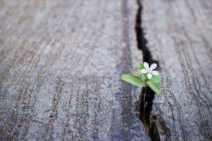 Un fiorellino bianco riesce ad uscire da una crepa