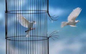 Una colomba spicca il volo verso il cielo azzurro e rompe le sbarre della gabbia